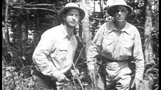 Jacaré (1942) JUNGLE ADVENTURE