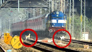 Dog Escapes Death | Train Missed Dog Just By Few Meters| Kamakhya - LTT AC Express