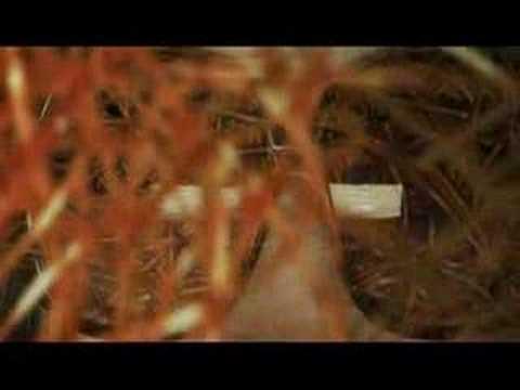 "Rush ""Far Cry"" FULL VIDEO (PREMIERE)"