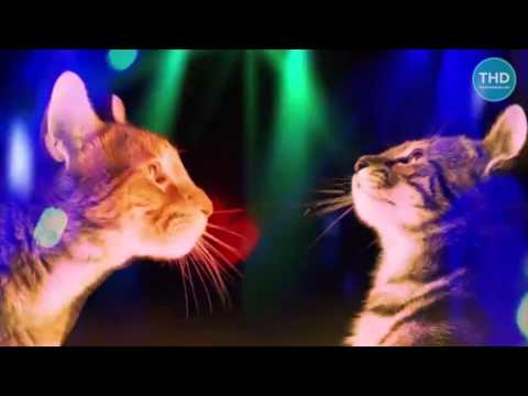 Party Cat DJ - DJ cat - Animal DJ - cat music - catparty
