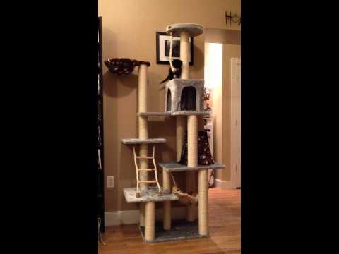 TuxedoTrio: Kittens climb their first cat tree