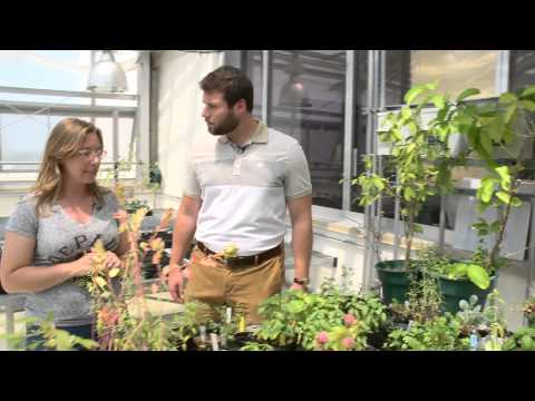 2 Minute Tour - McGowan South Greenhouse and Rooftop Garden