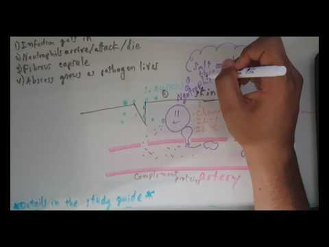 Abscess Pathophysiology