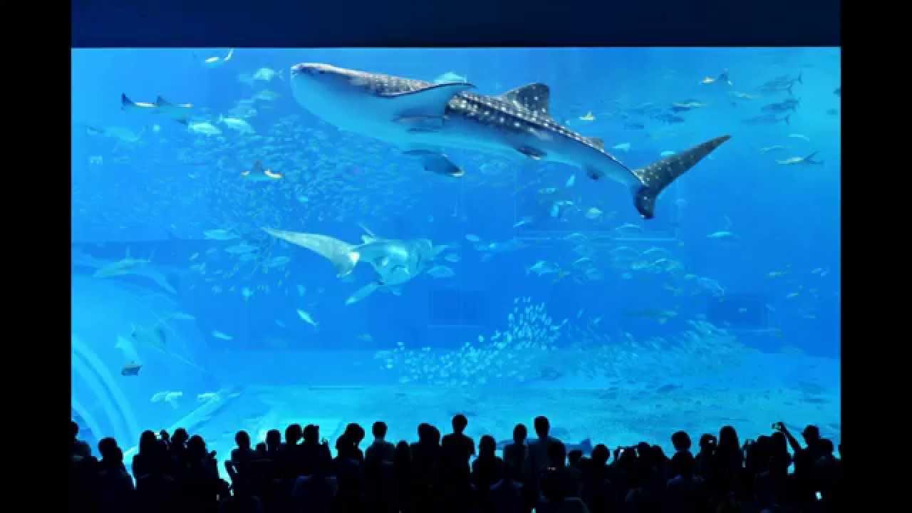 Kuroshio Sea Churaumi Aquarium Okinawa