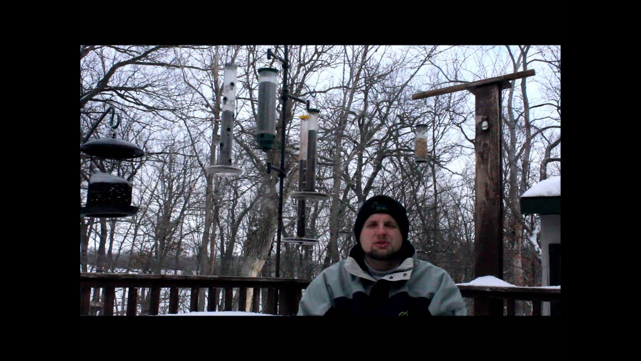 how to hand feed wild birds in your backyard youtube