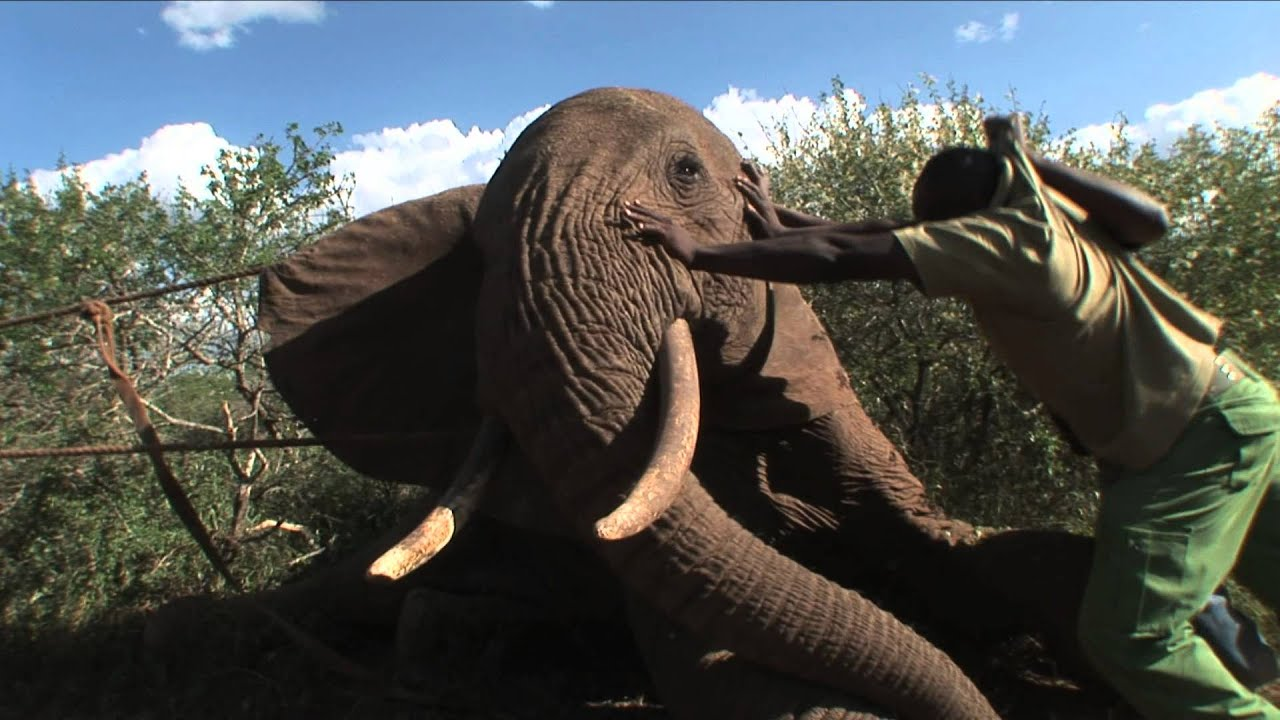 DSWT/KWS Mobile Vets in Action