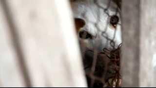 Приют для бездомных животных в Сыктывкаре