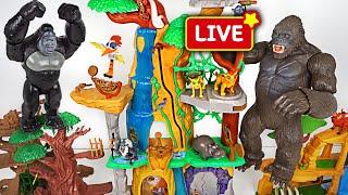 DuDuPopTOY Live Streaming