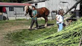 TILLERS INTERNATIONAL Pressing Sorghum for Molasses with Draft Horse Power, Harvest Fest 2009