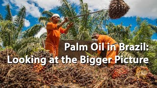 Palm Oil in Brazil: Looking at the Bigger Picture