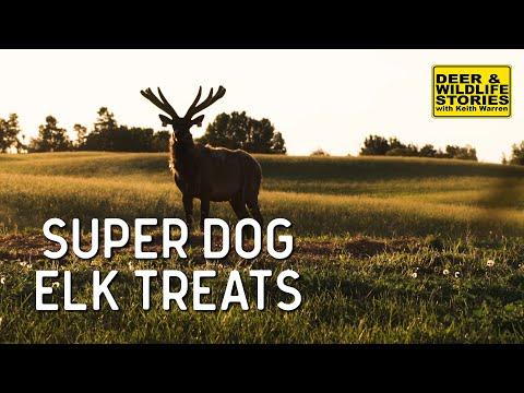 Elk Farming With Super Dog | Deer & Wildlife Stories