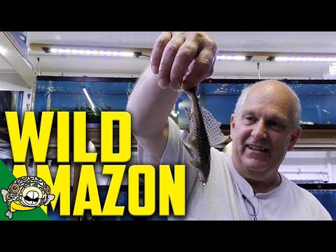 WILD FISH UNBOXING!