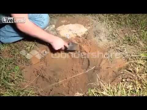 koloni semut api