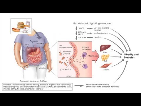 Ketogenic Diet, Endotoxin & Gut Health