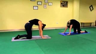 Оксисайз упражнение для спины, кошка, видео урок онлайн.