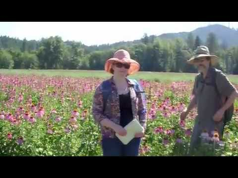 Pacific Botanicals Organic Farm tour