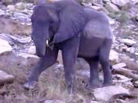 Kariba Sanyati  Elephants