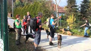 TOUR DE NIELEPICE - wyprawa z Wild Dogs Team - 27.10.13r