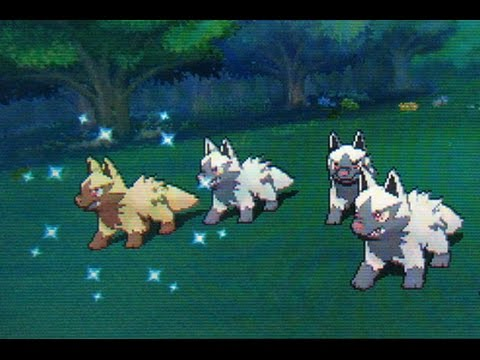 Shiny Poochyena In Horde On Route 103 Pokemon Alpha