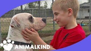 Listen to little boy's heartfelt pleas for dogs in need of home