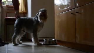 Самая послушная собака