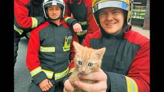 Проект о пожарных 2 класс