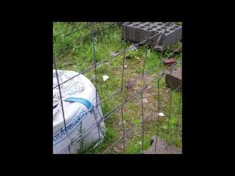 Denuncian la presencia de ratas en solares abandonados de la ciudad