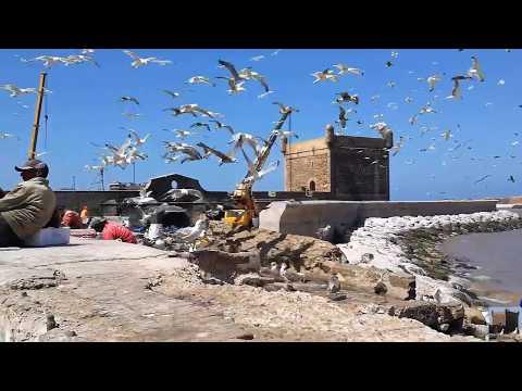 ESSAOUIRA - جولة رائعة في الصويرة Une Grande Balade en Ville