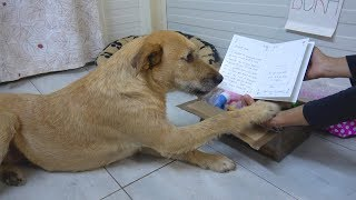 Sad Shelter Dog's Reaction When She Receives Sweet Letter From Adoptive Mom