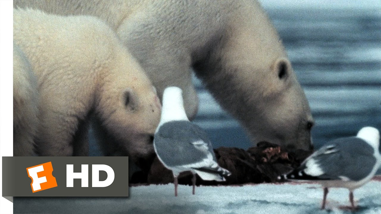 Download Arctic Tale (4/10) Movie CLIP - Stealing Walrus Meat (2007) HD