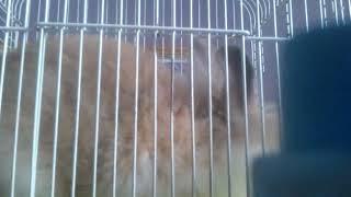 Мой кроля 1 часть