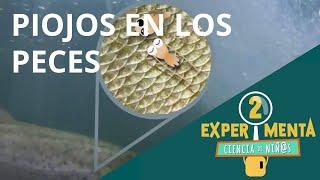 Piojos en los peces | Experimenta, ciencia de niñ@s