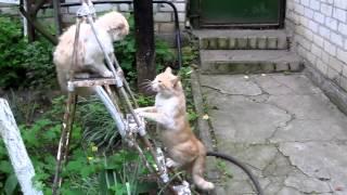 Суперспособность кота)