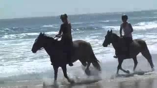 Horse Trail Rides Mornington Peninsula, Melbourne | Experience Oz & Nz