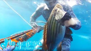 Ψαροντούφεκο - Κυνηγώντας τις Στήρες / Spearfishing Golden Grouper - Το ψάρεμα και τα μυστικά του