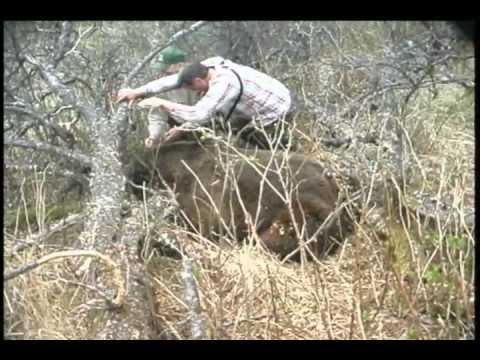 Brown Bear Hunt on Kodiak Island - YouTube - photo#36