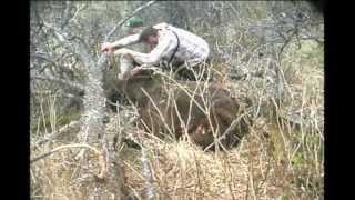 Brown Bear Hunt on Kodiak Island