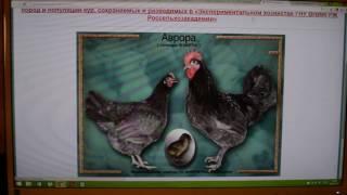 Куры-несушки. От яйца до яйца. Выращивание и содержание кур подробно.