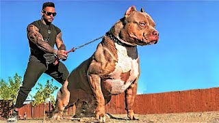 14 Most Aggressive Guard Dogs in the World