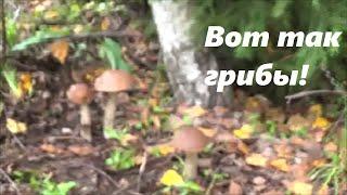 № 65. Осень 2016 — грибной рай!