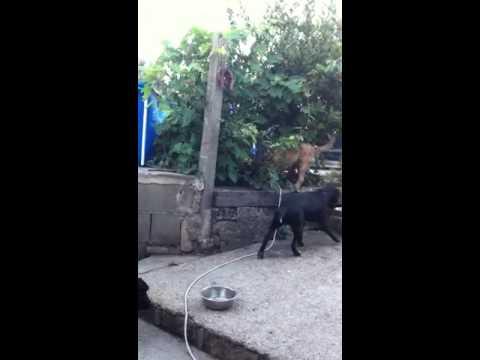 A caccia della spinosa!