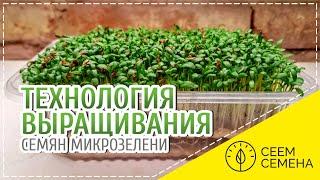 Технология выращивания семян микрозелени СЕЕМ СЕМЕНА