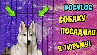 СОБАКУ ПОСАДИЛИ В ТЮРЬМУ! Говорящая собака