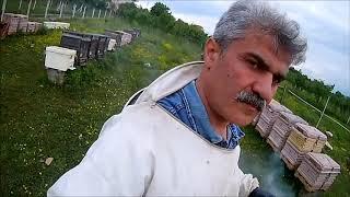 Fikret Baydemir Arıcılık ana arı ızgarası kullanımı , nasıl yapılır ??? ...