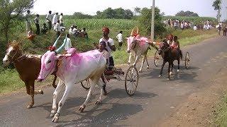 Horse And Bullock Cart Race Nej. बैल आणि घोडागाडी. бык и скачки.बैल और घोड़े की दौड़.