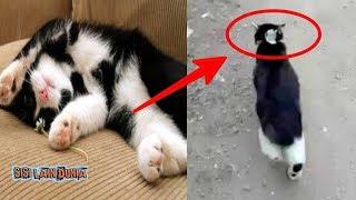 Download lagu Pintarnya ini Kucing Dikasih Uang Beli Sosis di Warung nya Jadi Viral MP3