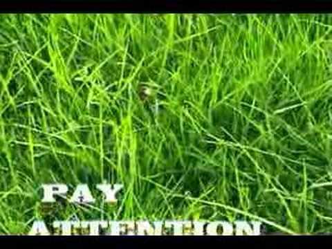 terraria how to grow grass