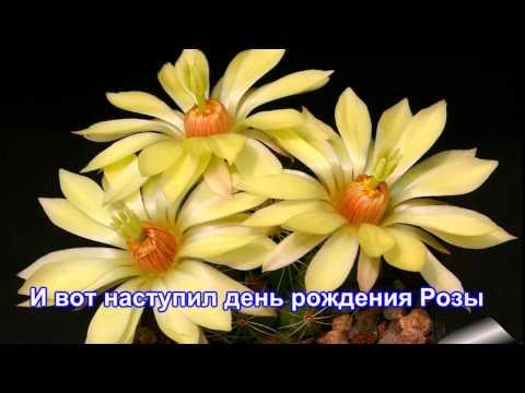 Легенды о цветах  Кактус