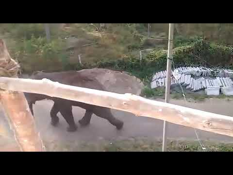 Elephant attack Kerala in February 2019 - YouTube