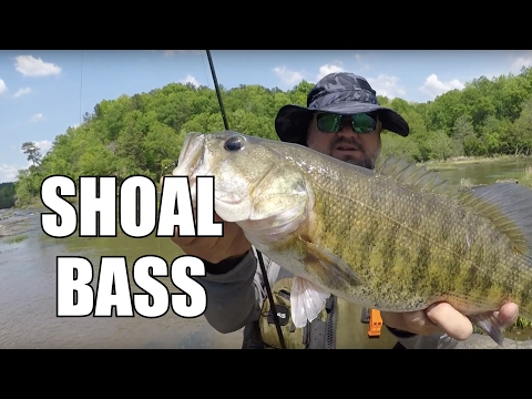 Kayak River Fishing | My Personal Best SHOAL BASS - Part 1